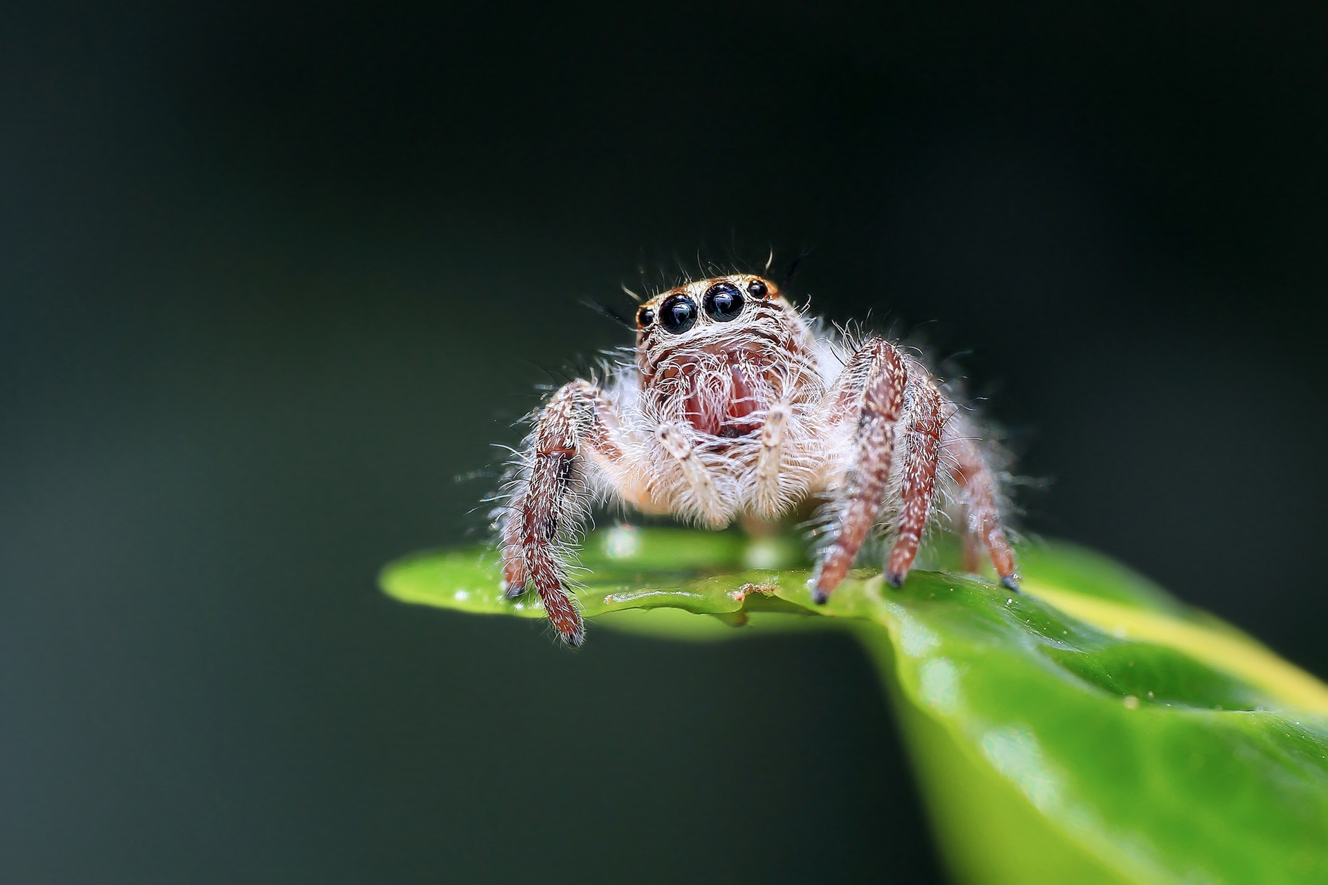 animal-arachnid-blur-257554