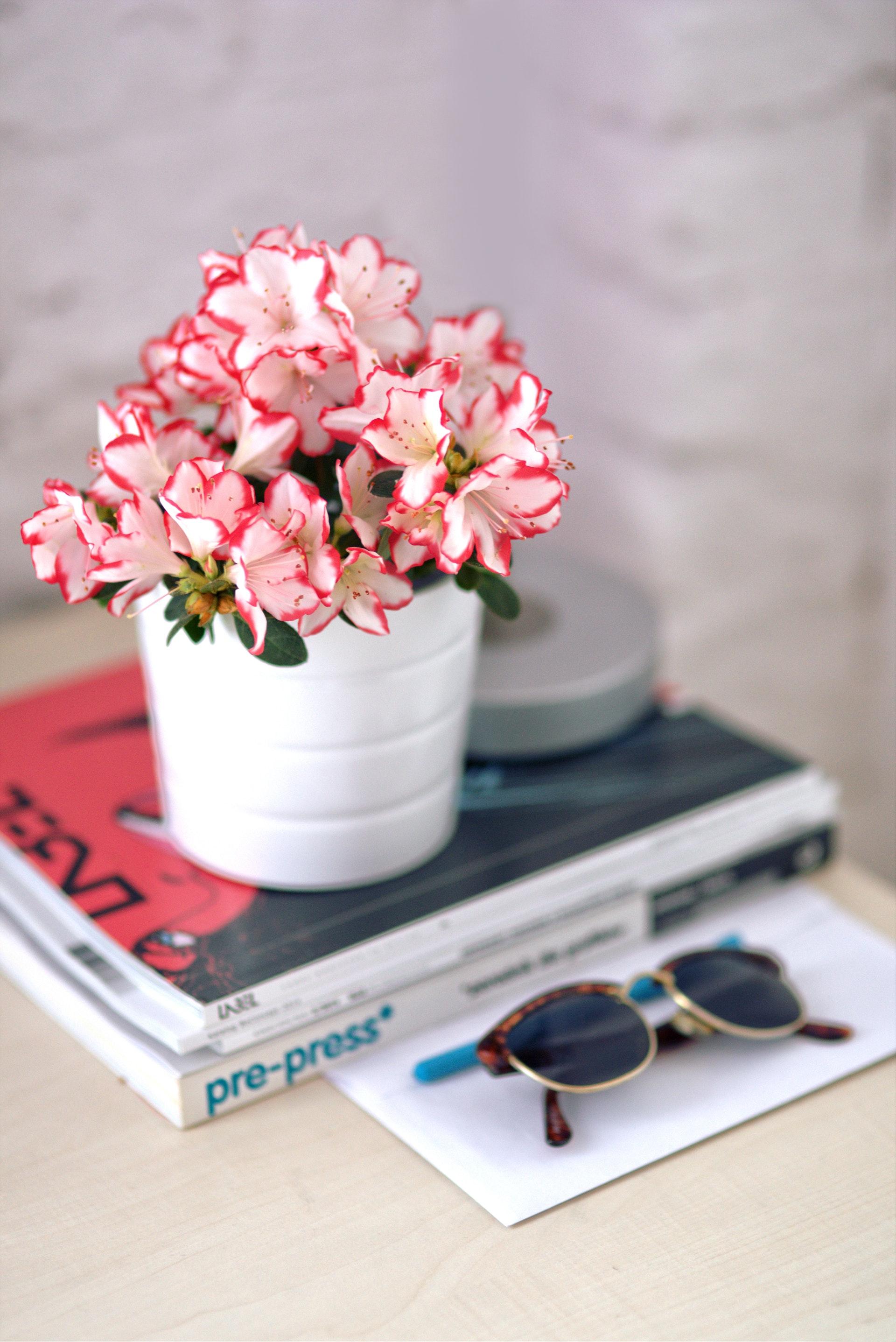 azalea-bright-card-5721