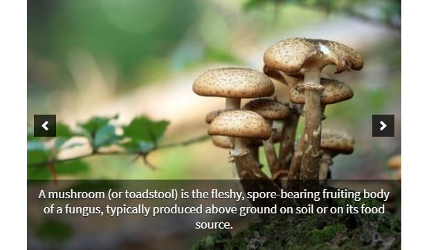 A picture of some mushroom with a descriptive caption beneath