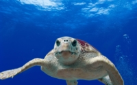 animal-close-up-ocean-68744