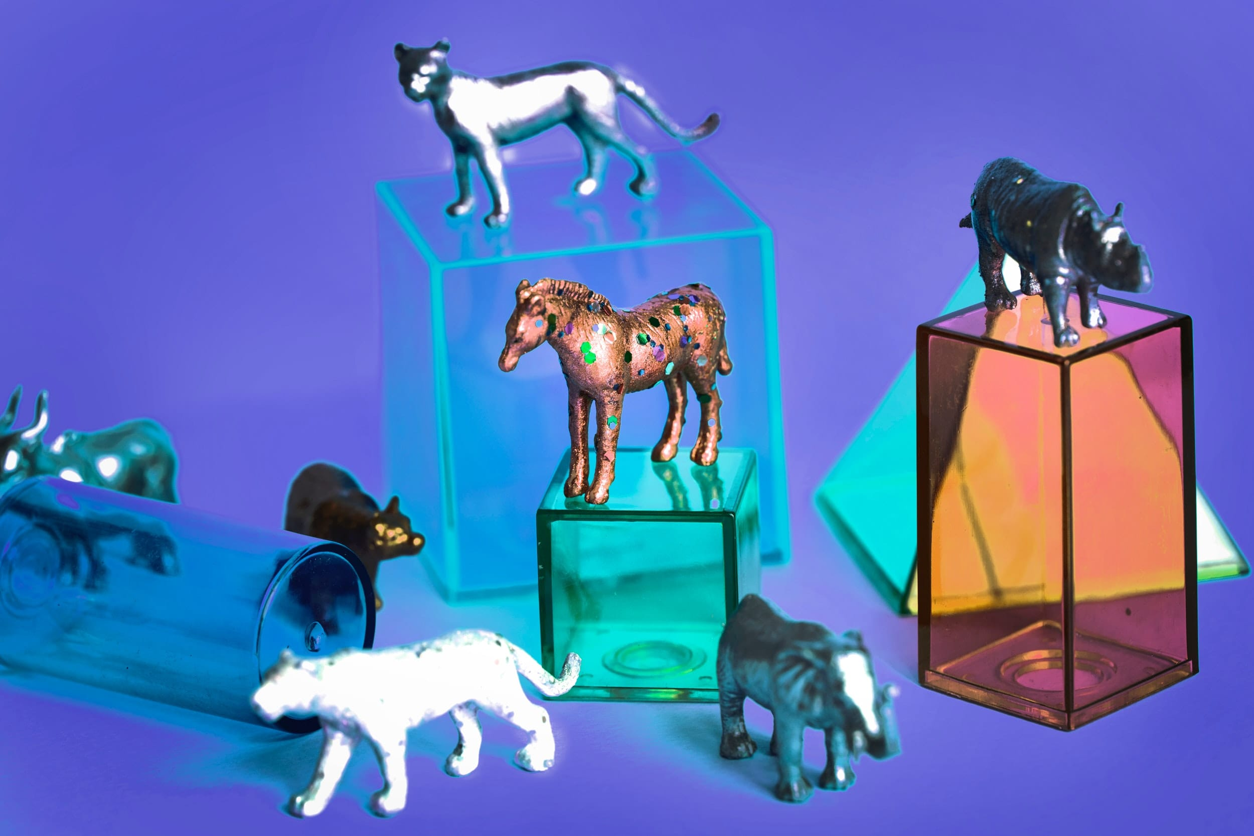 animals-background-boxes-941545