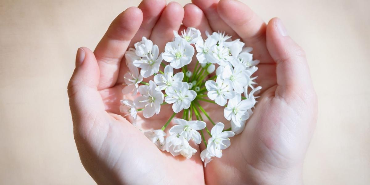 flower-blossom-bloom-white-161552