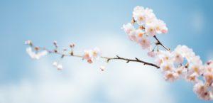 9 Stunning Spring Sliders